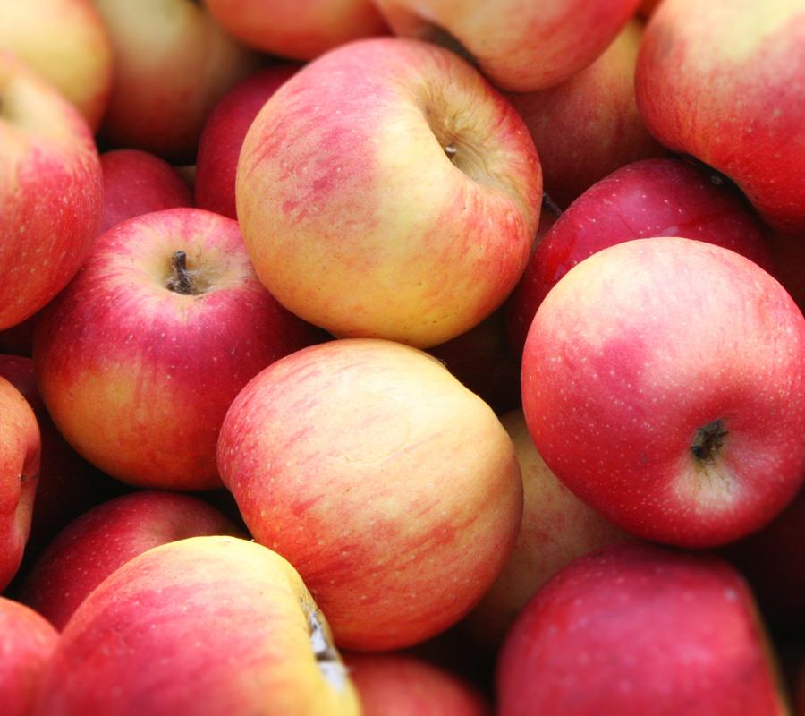fruits-et-legumes_pommes